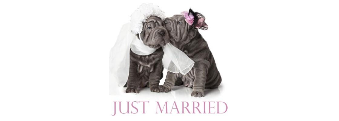 Hochzeit Mit Hund Heirat Mit Hund Hundezubehor Fur Hochzeiten