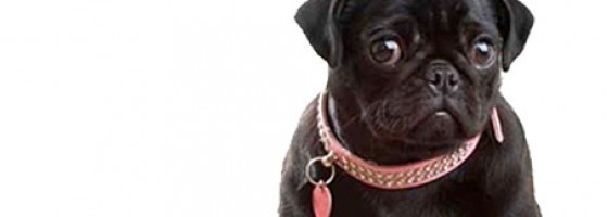 Hundezubehor Hundebekleidung Hundebett Luxurydogs