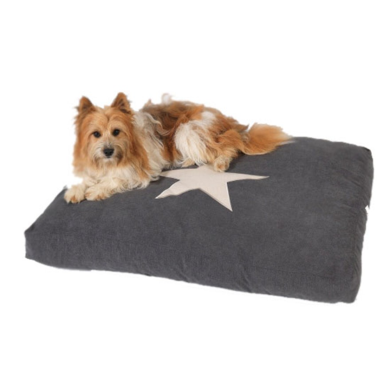 hundekissen be a star anthrazit in 3 gr ssen luxus. Black Bedroom Furniture Sets. Home Design Ideas