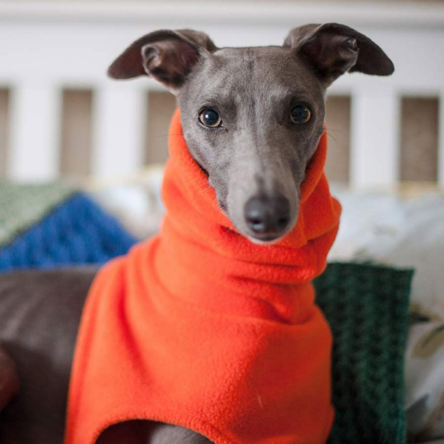 Fleece-Snood Windhund-Schal orange Grafschaft Kent