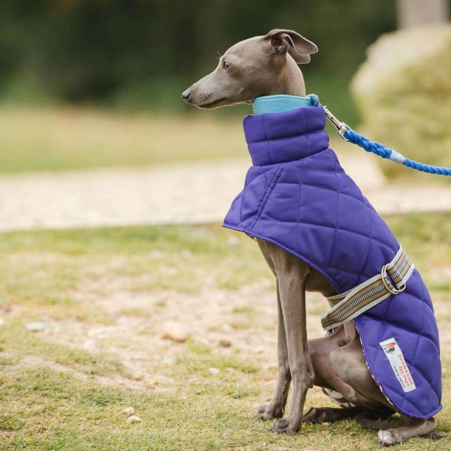 Stepp-Windhundmantel Royal für Italien Greyhound & Whippets