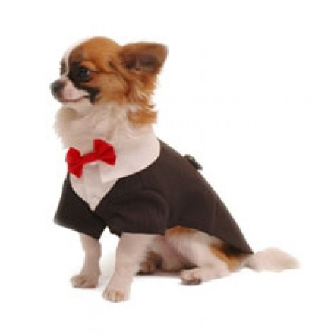 Hochzeitsmode für Hunde, Hunde-Hochzeitsmode, Hundefrack, Hunde ...