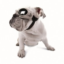 Hundebrille Chrome