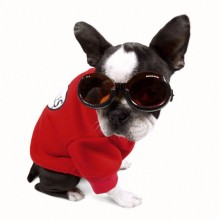 Hundebrille Racing Flame