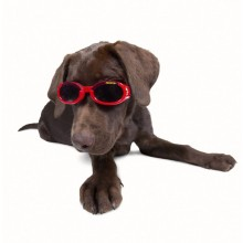 Hundebrille Red Star