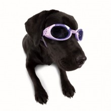 Hundebrille Happy Flower Gr. S