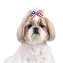 Hundehaarschleife Stars & Stripes
