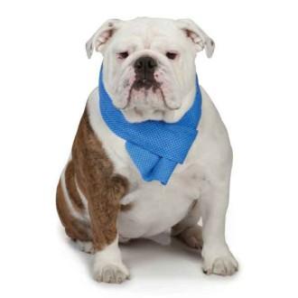Kühl Hundezubehör Kühl Hundehalsband Kühl Hundewesten Und Matten