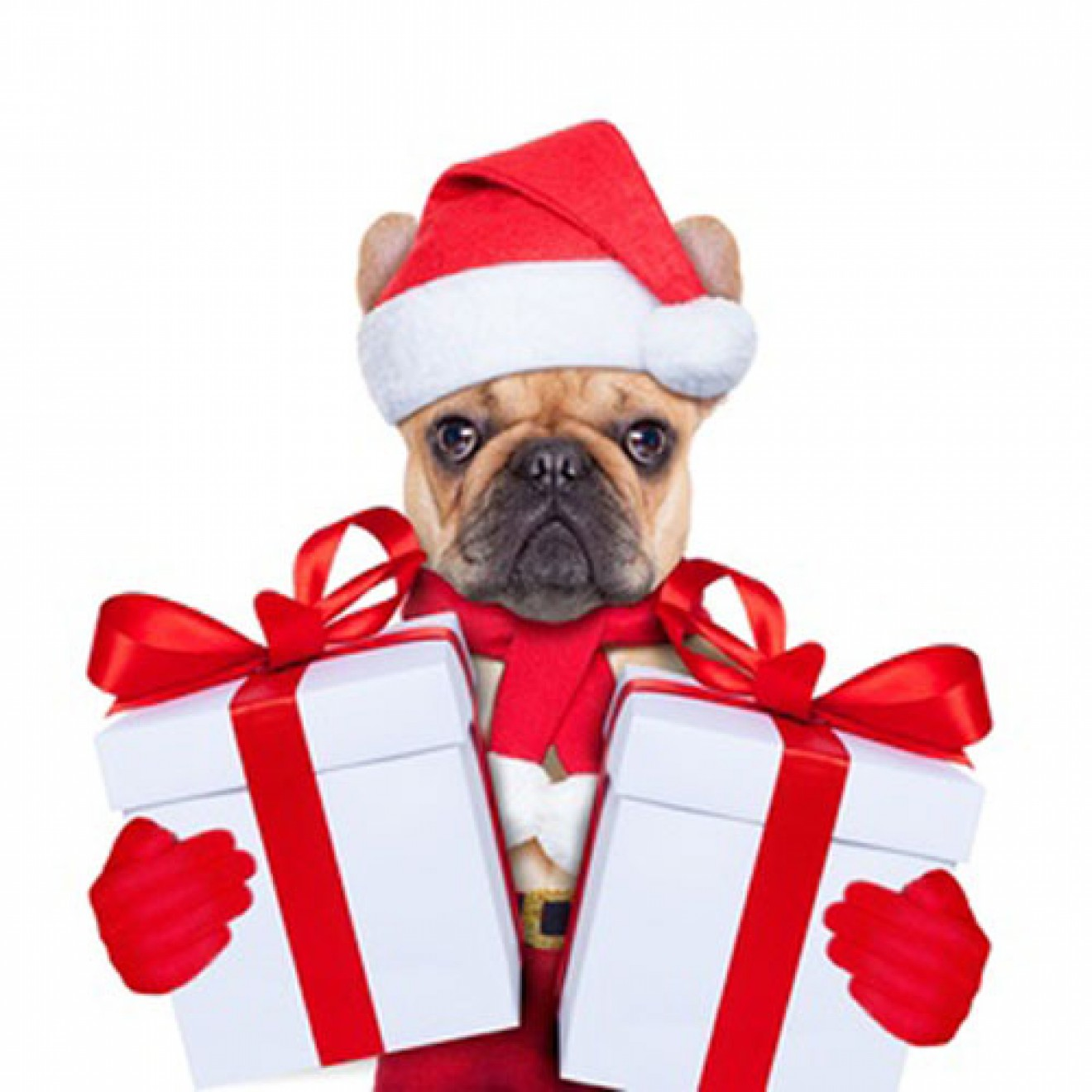weihnachts berraschungsbox f r kleine hunde weihnachts. Black Bedroom Furniture Sets. Home Design Ideas