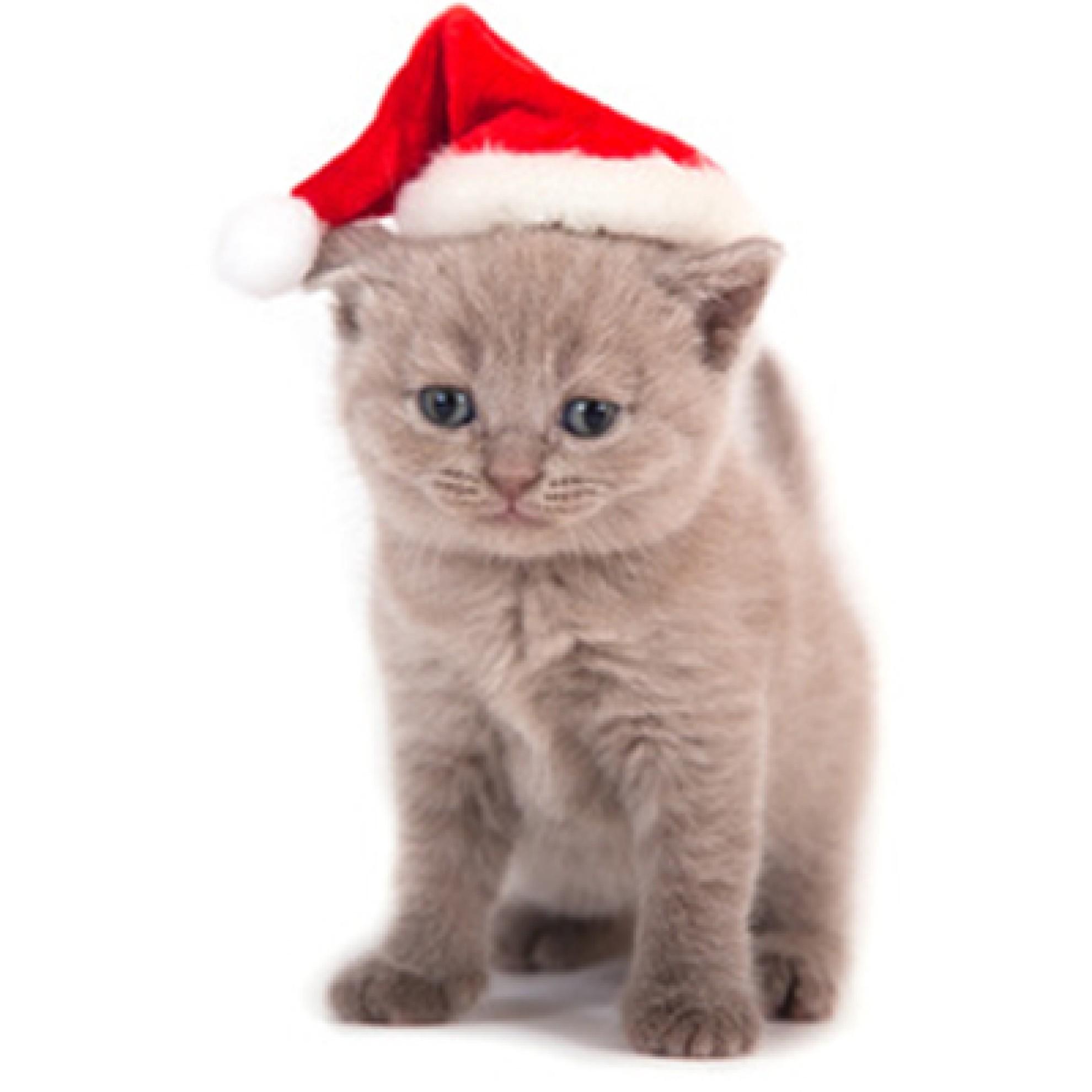 weihnachts berraschungsbox f r 1 katze berraschungspaket katze weihnachten. Black Bedroom Furniture Sets. Home Design Ideas